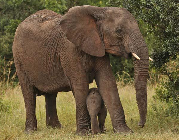 Elephants in OWC