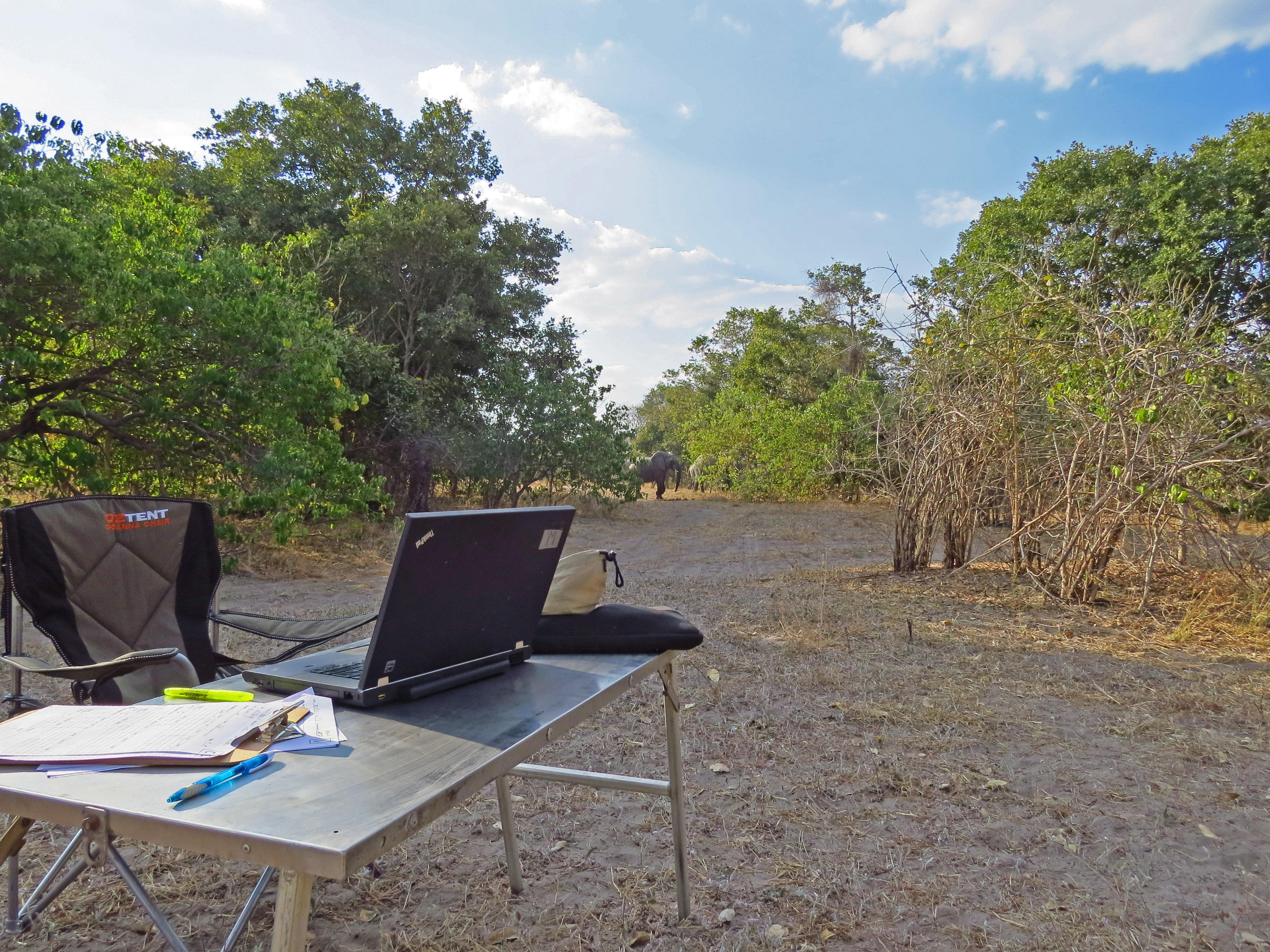 Monitoring wildlife in Africa