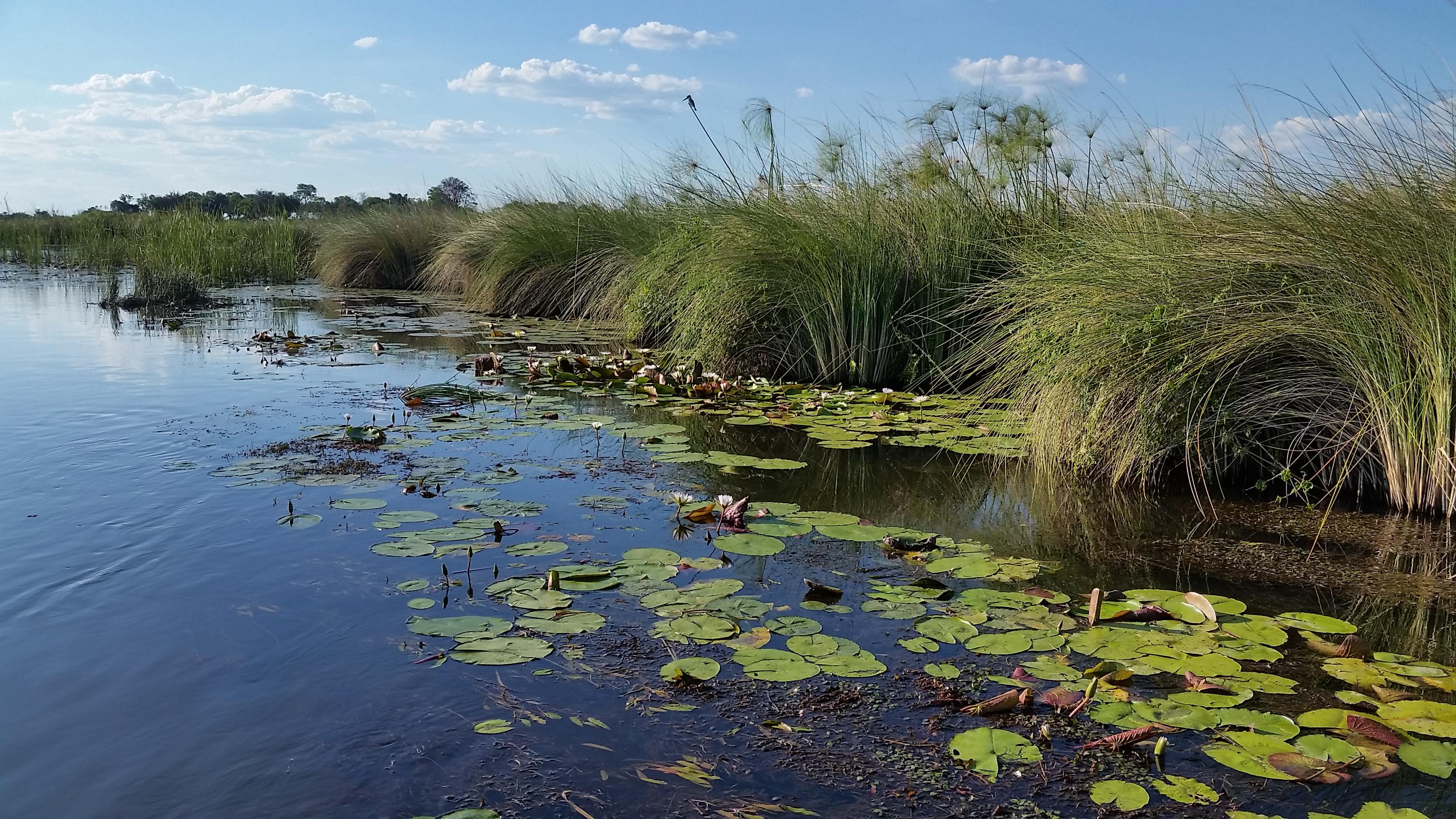 Okavango Delta, Moremi Game Reserve