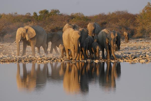 Elephants at watering hole in Etosha