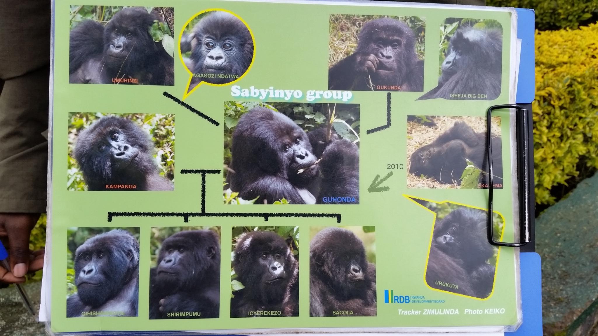 Sabyinyo Group gorillas