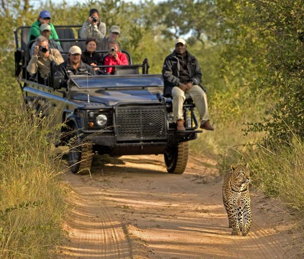 African safari with leopard