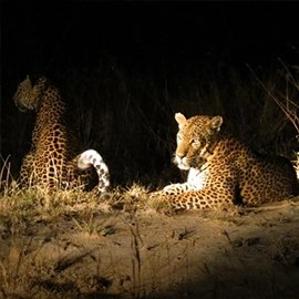 Night game drives
