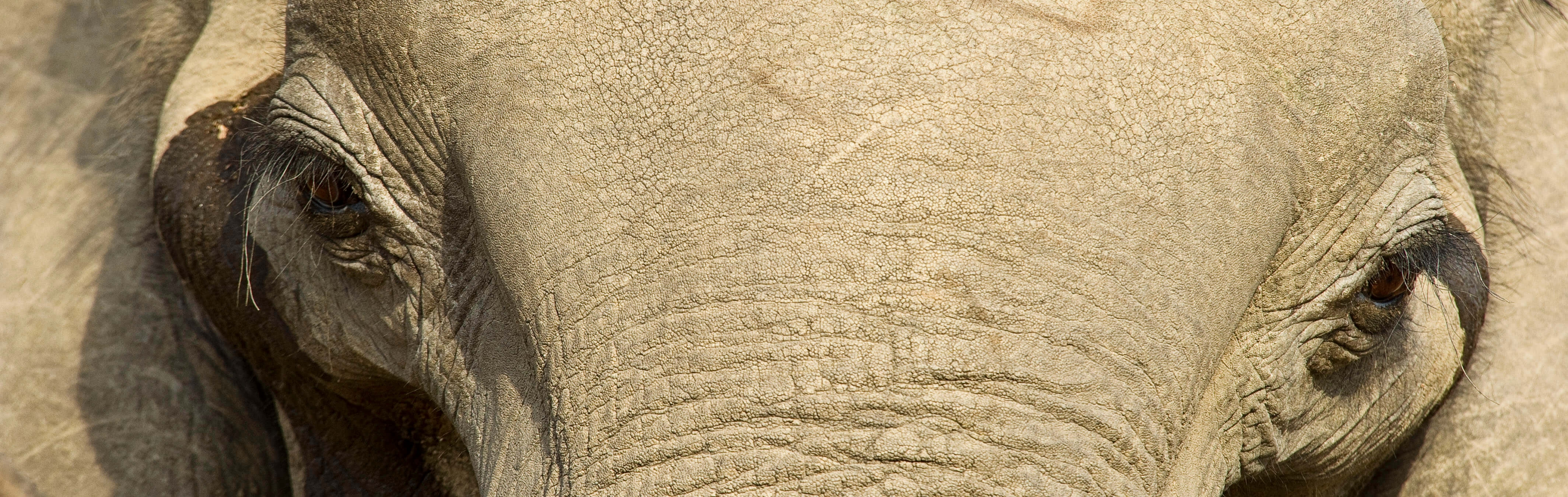 Elephant close up in Zambia, J. Goetz
