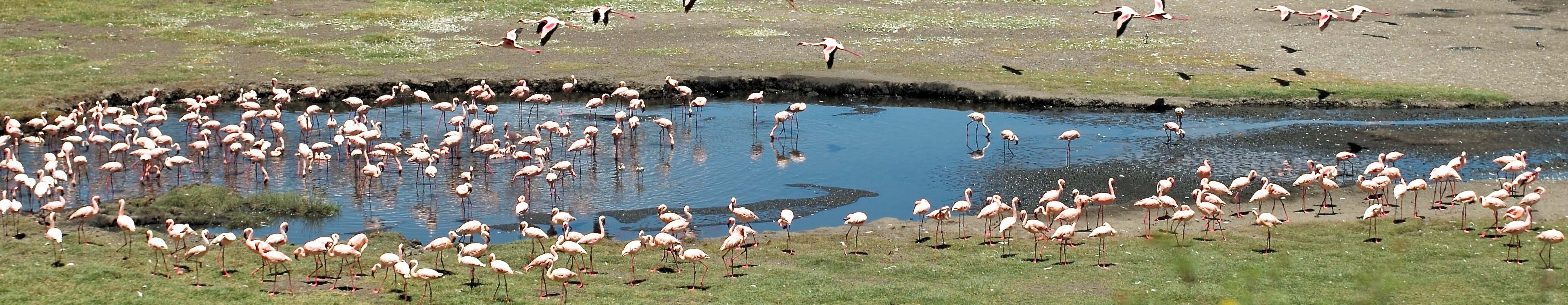 Flamingos in Arusha National Park | Wikimedia