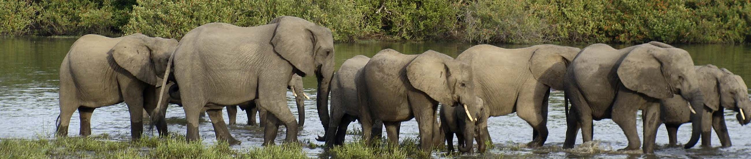 Elephants in Saadani | Experience Zanzibar Tours & Safaris