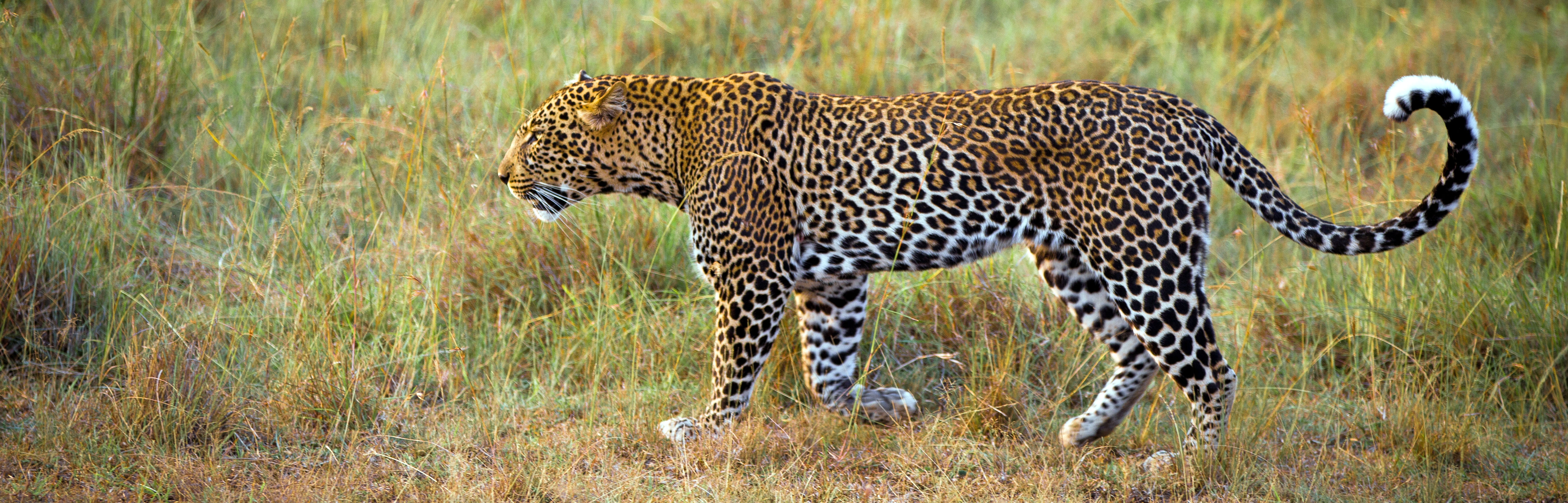 A leopard in Buffalo Springs | Apex Photo Safaris