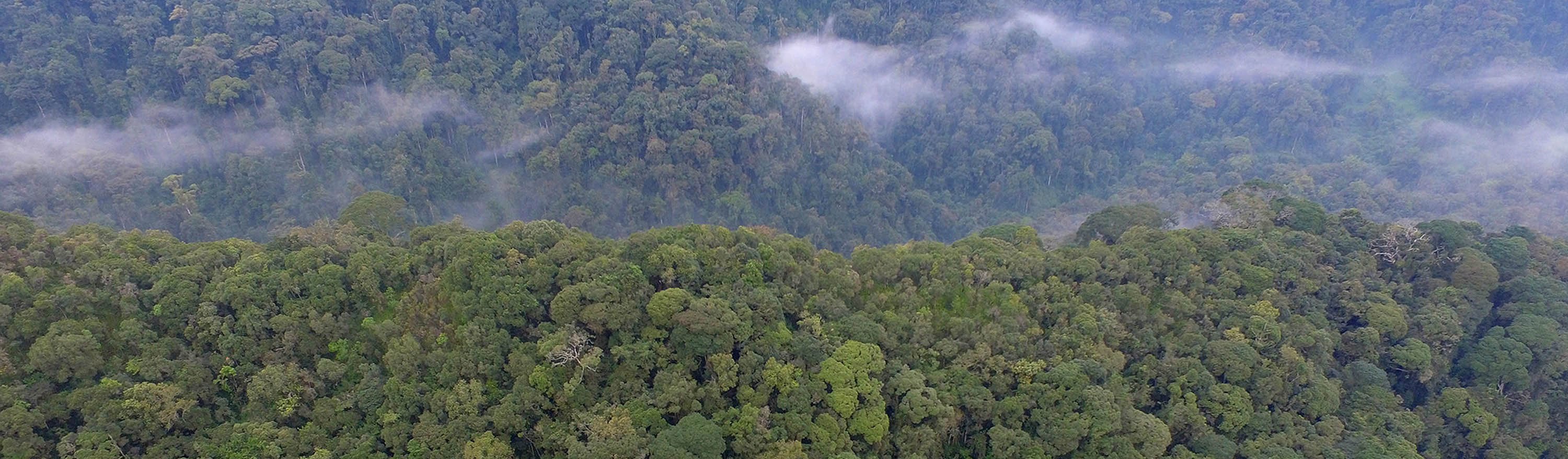 Nyungwe Forest National Park | Kambogo