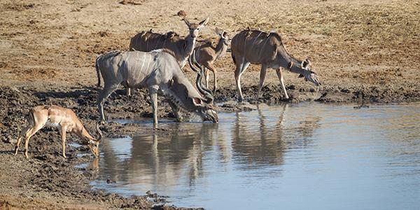 Hwange watering hole