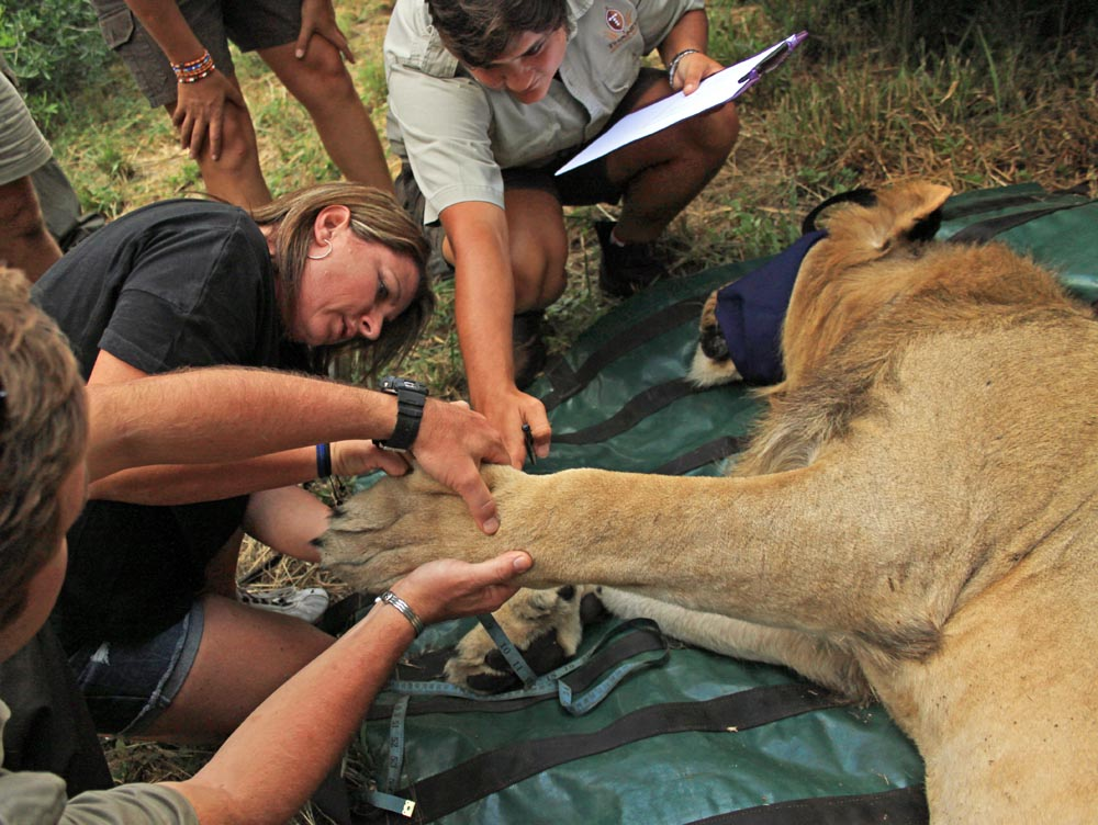 Drew with lion, Captured in Africa Foundation